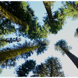 Up high by Devi Prasad Rath - Nature Up Close Trees & Bushes ( trees, forest, giant )