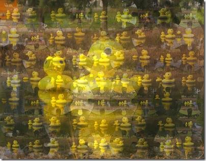 duck Mosaic_0009