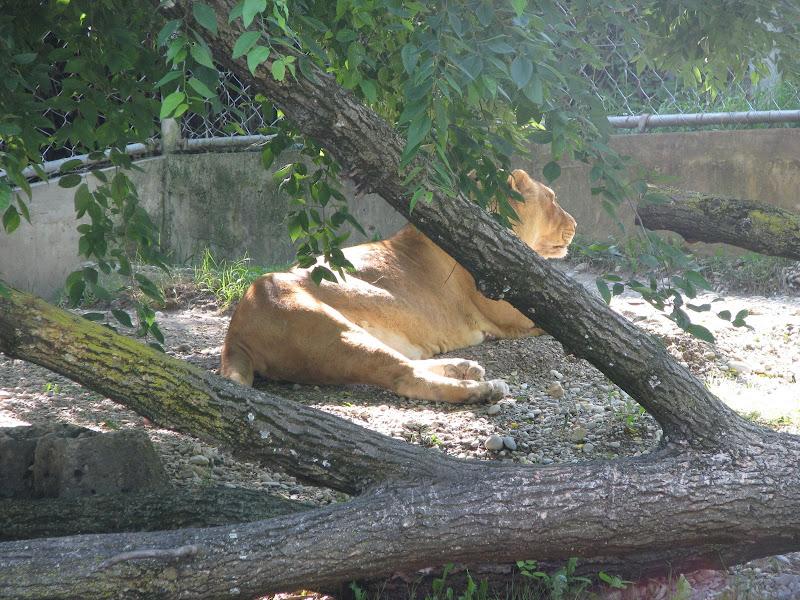 Animaux au Parc de la Tête d'Or