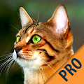 App Cats apk for kindle fire