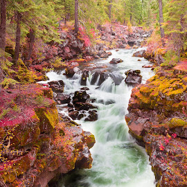 by Becca McKinnon - Landscapes Waterscapes ( water, oregon, waterfalls, rogue river, fall, waterfall, trees, rocks, rogue, fall color )