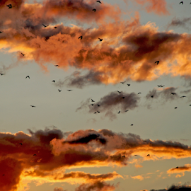 by Gordana Nikolovska-Dimeska - Landscapes Cloud Formations ( clouds, orange, diversity, freedom, colorful, colors, flock, birds, sun, flying, flight, sky, among the clouds, sunset, cloud, sunrise )