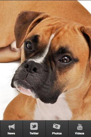 We Love Boxer Dogs