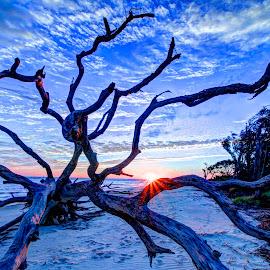 Driftwood Beach by James Dinsmoor - Landscapes Beaches ( driftwood, wide angle, beach, jekyll island, sunrise )