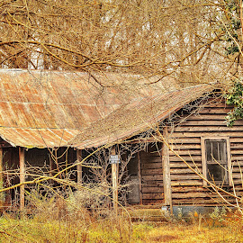 Cabin in Moore County by Lou Plummer - Buildings & Architecture Decaying & Abandoned