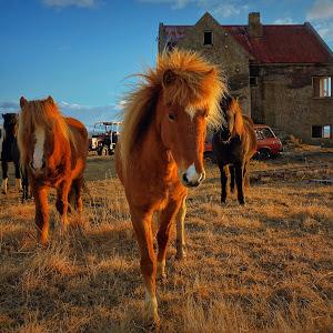 The horse3.jpg