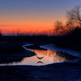 Jesolo - Lagoon - Morass by Fa Ve - Nature Up Close Trees & Bushes ( bird, jesolo, lagoon, sunset, twilight, veneto, morass, italy, river )