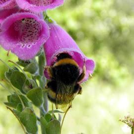 BioRia   SALREU by La Marques - Nature Up Close Gardens & Produce