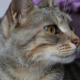 cat by Fabio Leanzi - Animals - Cats Portraits ( cat portrait pet animal canon 6d 24-105 )
