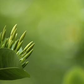 by Tharanga Jothirathna - Nature Up Close Gardens & Produce