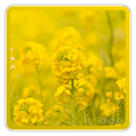 rapeflower [Live Background] icon