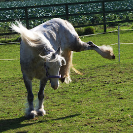 Dodger by Gareth Dickin - Animals Horses ( horse )