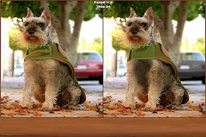 Screenshot of Dogs Spot the Difference