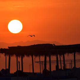 by Vasanthan Jayaguru - Landscapes Sunsets & Sunrises ( golden hour, sunset, sunrise )