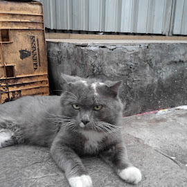 street cat by Ho Kan Keong - Animals - Cats Kittens ( cat, sad, street, gray, alone )