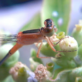 Little Dragonfly by Nanang Efendi - Instagram & Mobile Android