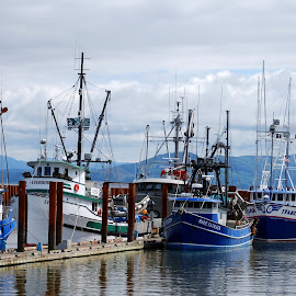 Oregon Harbor by Marie Terry - Transportation Boats ( calm, water, harbor, blue, boats )
