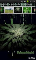 Screenshot of Weed HD wallpapers 2013