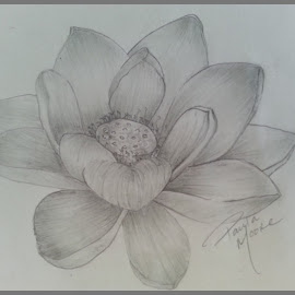 Lotus by Paula Moore - Drawing All Drawing
