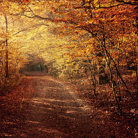 untitled by Zsolt Zsigmond - Landscapes Forests ( autumn, colors, fall, trees, forest, road, tunnel )