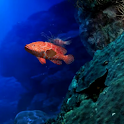 Aquarium Life HD LWP icon