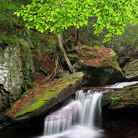 Aaron's Cascade by Tim Devine - Nature Up Close Water ( falls trail, stream, aaron's cascade, kitchen creek, waterfall, glen leigh, pennsylvania, leaves, ricketts glen state park )