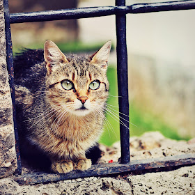 IMG_8047 kitty.jpg