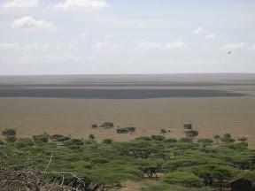 Llanura del Serengeti