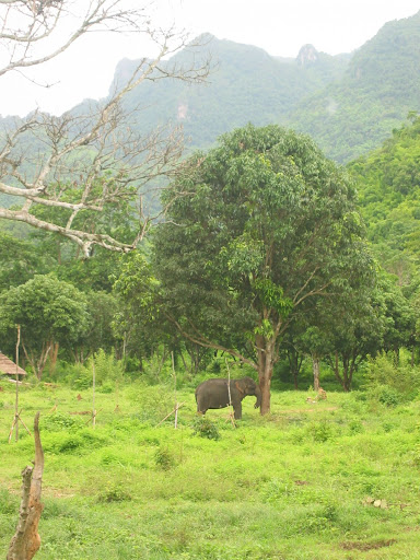 Słoniów jak psów