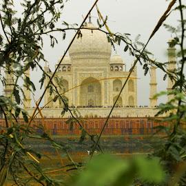 Story of love  by Avanish Dureha - Buildings & Architecture Statues & Monuments ( history, love, shahjahan, mughals, dureha@gmail.com, taj mahal, mumtaz, agra, india, avanish dureha )