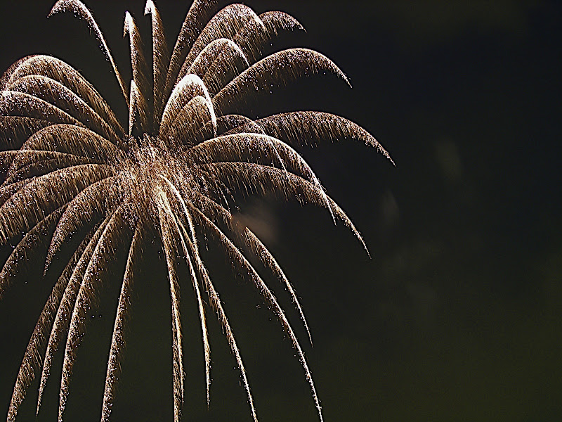 A large feathery firework