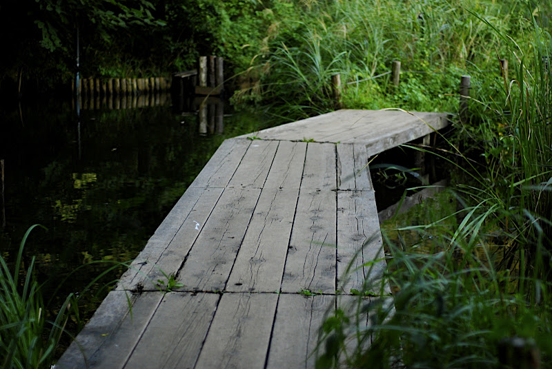 Small boardwalk in Shizen Kyoikuen