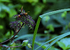 A wasp drinks a snack in Shizen Kyoikuen
