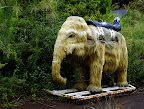 Apparently one could ride and roll o this mammoth