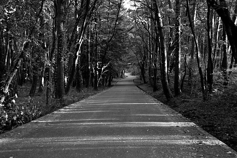 Yatsugatake Forest Road in Nagano, Japan