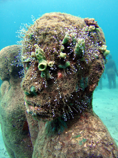 underwater sculpture, 6 months later