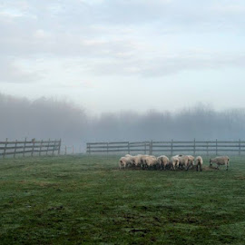 foggy morning on Lily Brook Farm by Nina Fuller - Landscapes Weather
