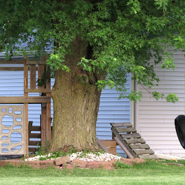 Backyard Play Area by Cindy Cooper Houser - City,  Street & Park  Street Scenes ( jungle gym, area, tree, play, swing )