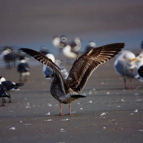 Flap Away by Blake Coln - Animals Birds ( bird, fly, sea, feather, flock )