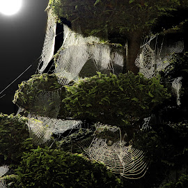 Webs by John Phielix - Nature Up Close Other Natural Objects (  )