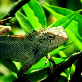 by Shubhra Sau - Animals Reptiles