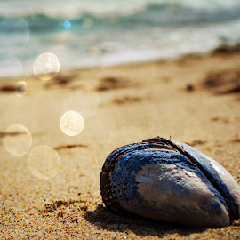 Shoreline Mussel by Tricia Scott - Landscapes Beaches ( shore, shell, sand, mussel, blue, seafood, ocean, beach )