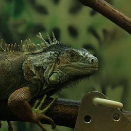by Prakash Sivaraj - Animals Reptiles