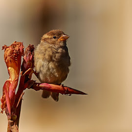 Waiting by Radu Eftimie - Animals Birds