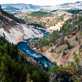 Grand Canyon of Yellowstone by Kimberly Sheppard - Landscapes Travel ( national park, yellowstone national park, trees, canyon, river )