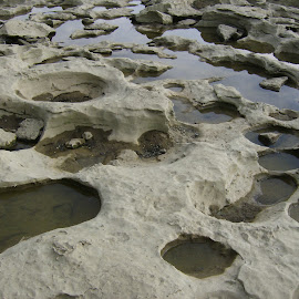 Ohio River Fossil Bed by Jane Singer - Nature Up Close Rock & Stone