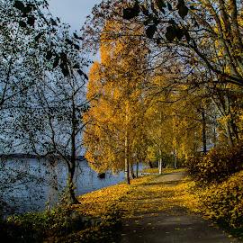 Autumn Arboretum in Tampere by Sakari Partio - City,  Street & Park  City Parks