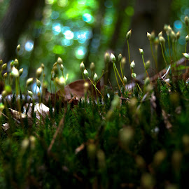 Forest Floor by Jessica Ruettgers Pape - Novices Only Macro ( grass, green, moss, forest, woods )