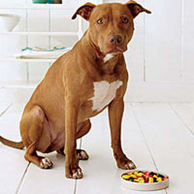 Pet Friendly - Puddy's Fruit Salsa