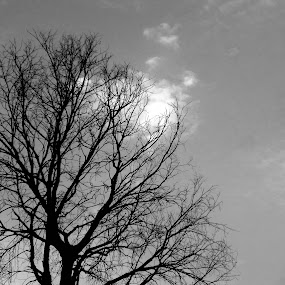 dry life by Shashank Sharma - Black & White Landscapes ( sky, dry, tree, black and white, lifeless )